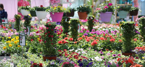 Gärtnerei Ganger | Unser Angebot - Pflanzen