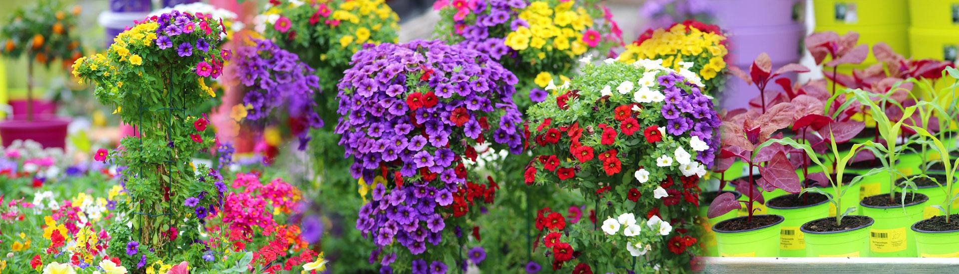 Gärtnerei Ganger | Frühling