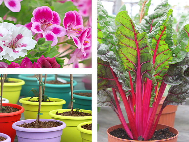 Gärtnerei Ganger | Pflanzenvielfalt