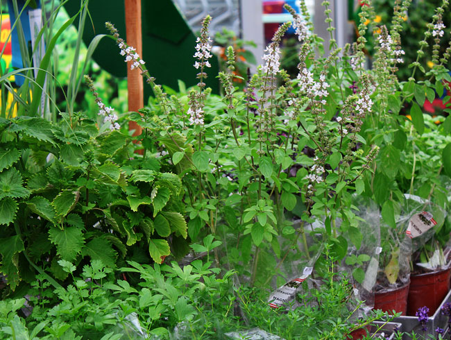 Gärtnerei Ganger | Pflanzenvielfalt - Kräuter