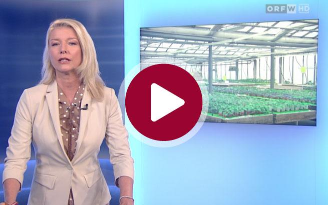 Gärtnerei Ganger | ORF-Beitrag 29.03.2020